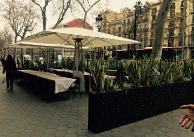 conillas-jardineria-diseno-terraza-y-decoracion-floral-restaurante-bodega-torres-barcelona-04