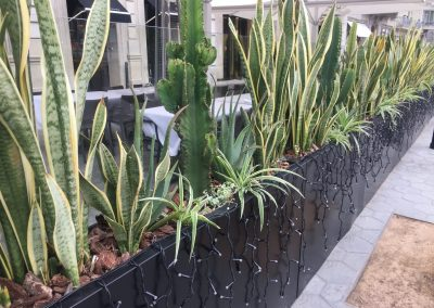 conillas-jardineria-diseno-terraza-y-decoracion-floral-restaurante-bodega-torres-barcelona-15