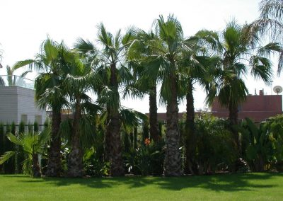 conillas-paisajismo-y-jardineria-diseno-jardin-y-contruccion-piscina-y-pagoda-08