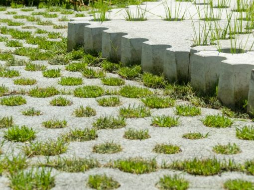 Proyecto de huerto urbano Conillas-SAS-Tria