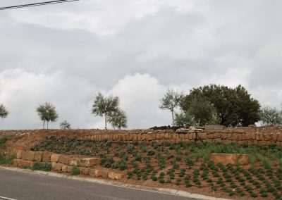 conillas-paisajismo-y-jardineria-estudio-del-espacio-diseno-paisajistico-y-ejecucion-proyecto-paisajistico-era-02