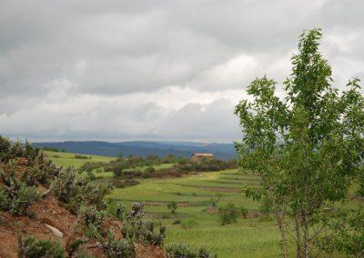 conillas-paisajismo-y-jardineria-estudio-del-espacio-diseno-paisajistico-y-ejecucion-proyecto-paisajistico-era-09