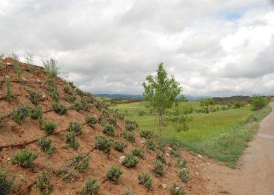conillas-paisajismo-y-jardineria-estudio-del-espacio-diseno-paisajistico-y-ejecucion-proyecto-paisajistico-era-11