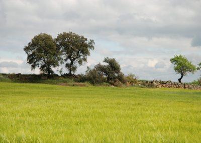 conillas-paisajismo-y-jardineria-estudio-del-espacio-diseno-paisajistico-y-ejecucion-proyecto-paisajistico-era-12