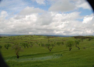 conillas-paisajismo-y-jardineria-estudio-del-espacio-diseno-paisajistico-y-ejecucion-proyecto-paisajistico-era-13