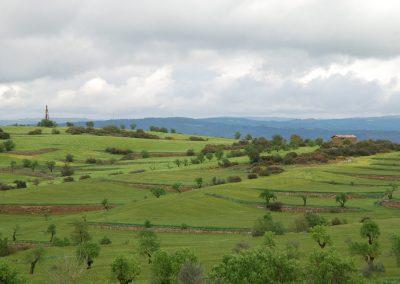conillas-paisajismo-y-jardineria-estudio-del-espacio-diseno-paisajistico-y-ejecucion-proyecto-paisajistico-era-16