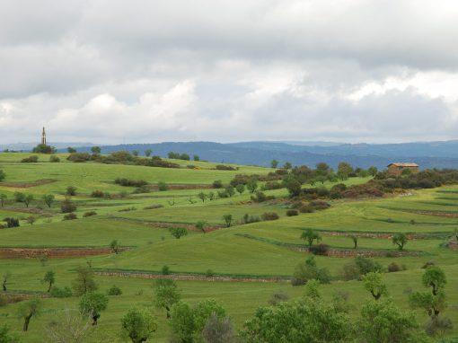 Projecte paisatgístic d'una era en La Segarra