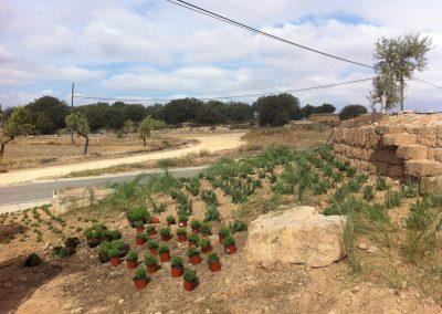 conillas-paisajismo-y-jardineria-estudio-del-espacio-diseno-paisajistico-y-ejecucion-proyecto-paisajistico-era-19