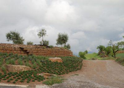 conillas-paisajismo-y-jardineria-estudio-del-espacio-diseno-paisajistico-y-ejecucion-proyecto-paisajistico-era-21