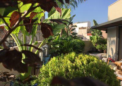 19-conillas-paisajismo-y-jardineria-proyecto-terraza-en-paseo-de-gracia