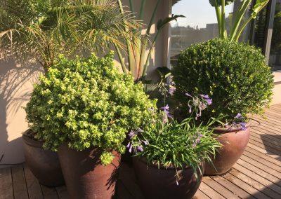 7-conillas-paisajismo-y-jardineria-proyecto-terraza-en-paseo-de-gracia
