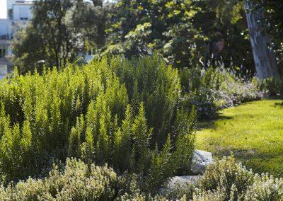 conillas-jardineria-y-paisajismo-proyecto-de-paisajismo-de-una-propiedad-privada-en-Sant-Gervasi-11