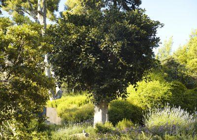 conillas-jardineria-y-paisajismo-proyecto-de-paisajismo-de-una-propiedad-privada-en-Sant-Gervasi-19