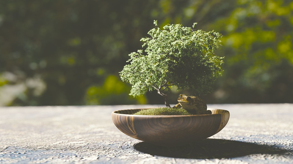 Seis ideas de regalos verdes